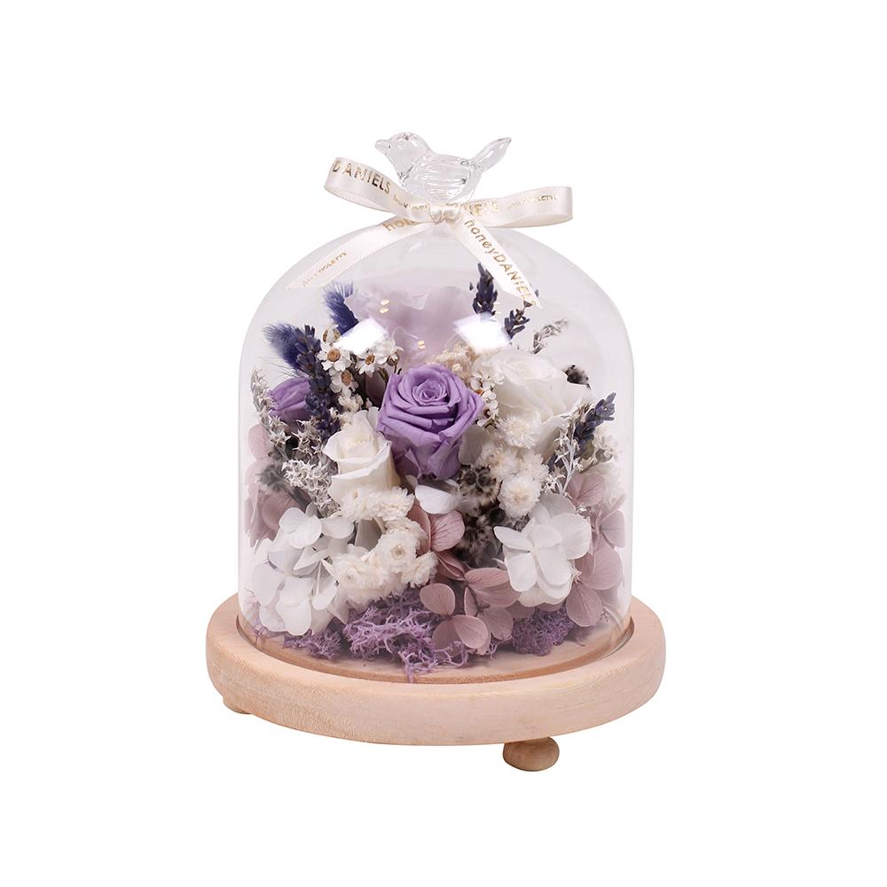 鐘罩恆星花-紫
