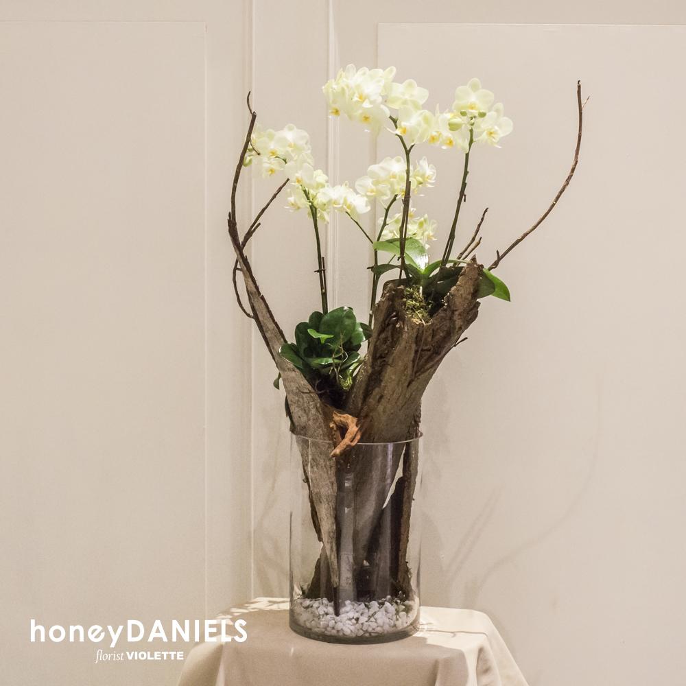 蘭花玻璃造景植栽