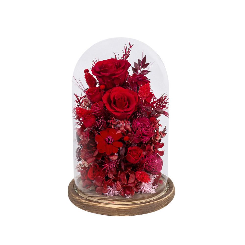 大鐘罩恆星花-紅